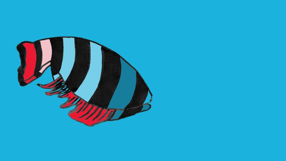 fisk156